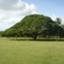 momi_tree