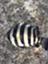 id:moory_ebioka