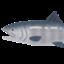 mori3_tomi