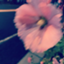 id:morimori_imonda