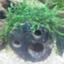 id:moti_aquarium