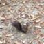 mr-squirrel