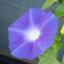 id:mura-saki0505