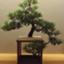 id:muramoto-wagashi