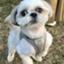 id:myumyumoki