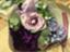 id:nagomigaki