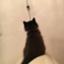 nanana_inugasuki