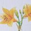 id:nikkokisuge