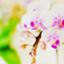 id:nn_grigio