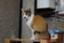 id:nobuaki11161036