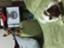 id:noi_mahalo-twodogs