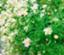 nonohana-wildflower