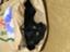 noraxcat