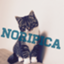 noripica