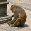 id:noteindia