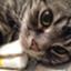 id:nununi