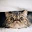 id:o_kaname1101