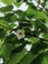 id:okanatumi