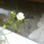 okap4651