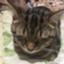 id:okym_ynkm021