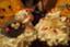 id:onigiricamp