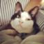 id:otabechan_t