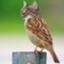 outsidecatbird