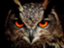 owlowl72