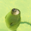 id:oysterwife
