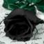 p_roses