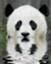 panda1600