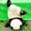 panda_toreno