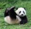 pandaboat