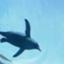 penguinwatcher