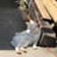 pennieblack-dog