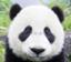 id:pingu_taro