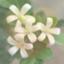 id:pinkandorenge
