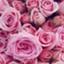 pinkmild