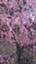 pinkpicg