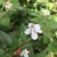 plant-raspberrypi3