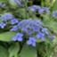 id:plant_macky