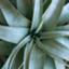 plantslife