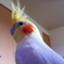 id:platypus2000jp
