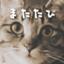 id:poco_game