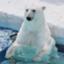 id:polarbear08