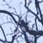 id:pommechy