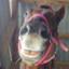 pony-yasu