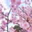 id:popcorn_bakuhatsu