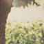prune_note