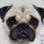 pug_money